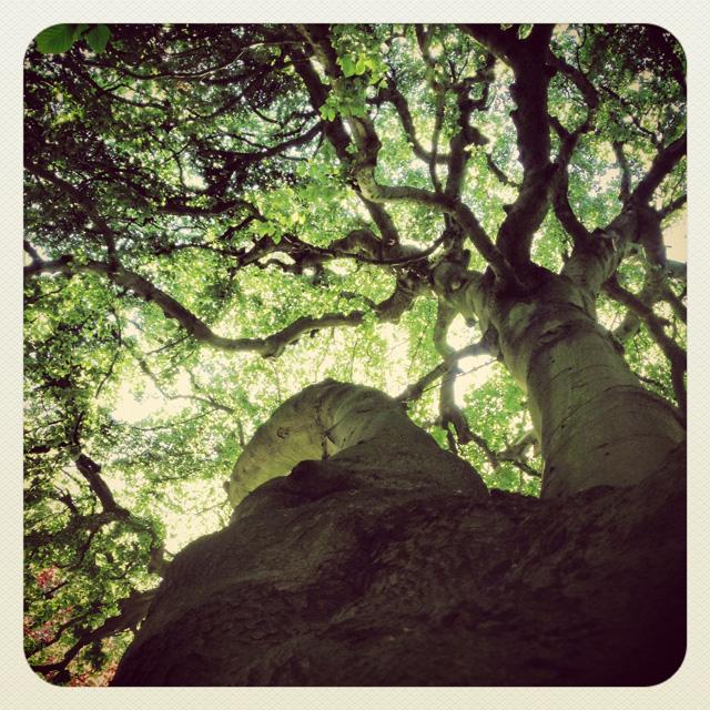 Trees@2x