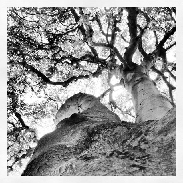 TreesBW@2x